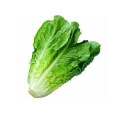 Lettuce Bunch 1 pcs.