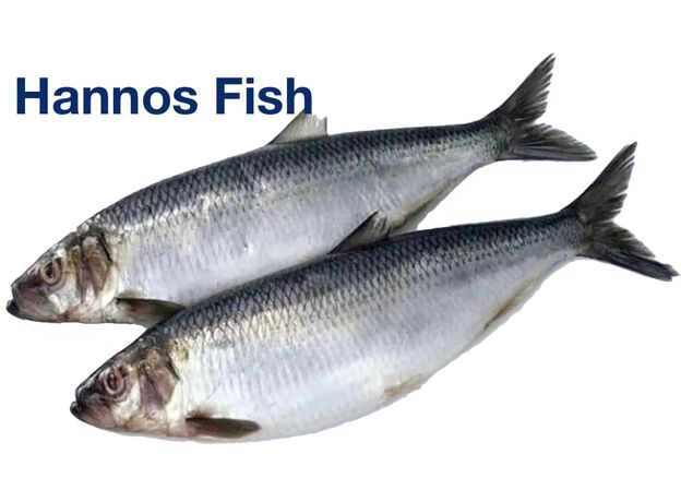 Hannos Fish in Limassol